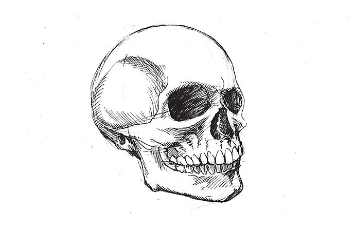 How To Draw A Skull Step By Step Adobe