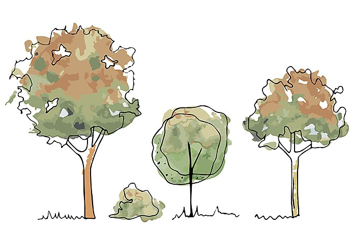 How To Draw A Tree A Step By Step Tutorial Adobe And depending on the specific kind of tree it is, the top shape will vary… but usually it's circular or ovular in. how to draw a tree a step by step