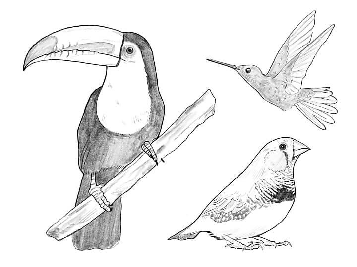 Learn How To Draw A Bird Adobe