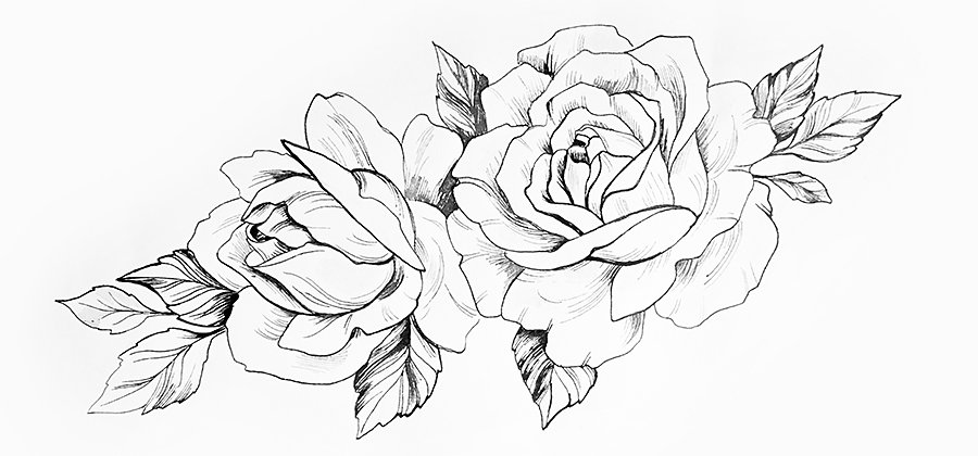 Learn How To Draw A Rose Adobe