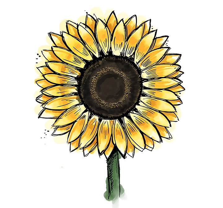 How To Draw A Sunflower Easily Adobe