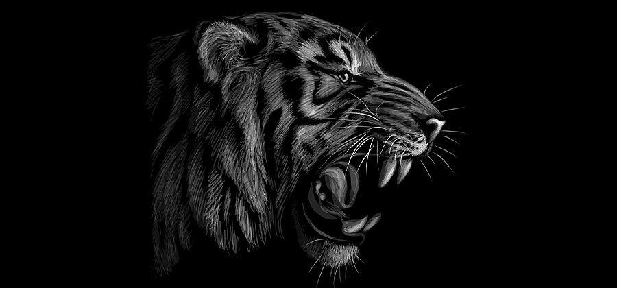 How To Draw A Tiger Step By Step Adobe