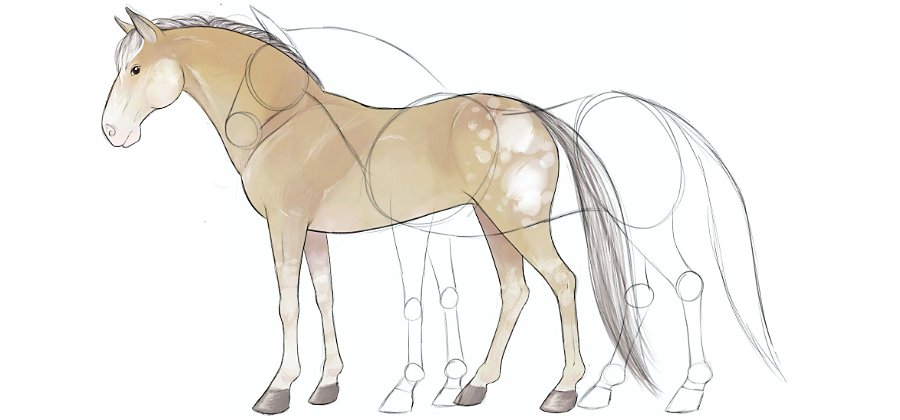 Learn How To Draw A Horse Adobe